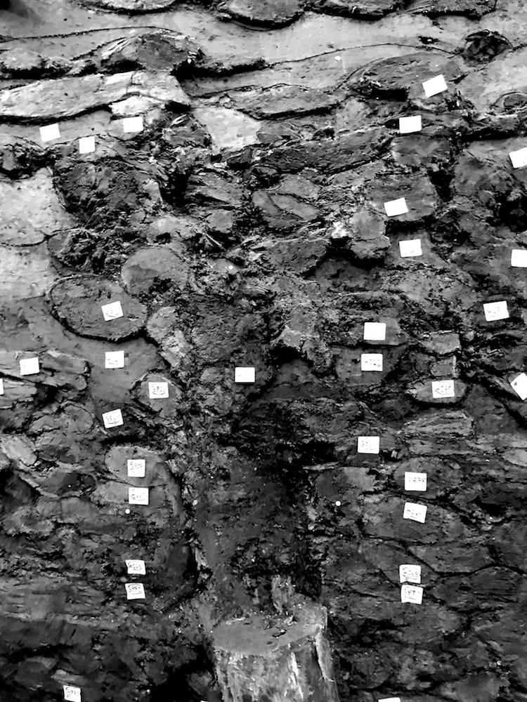 Detail des Profils mit zahlreichen kleinen Holzstämmen im Schnitt.