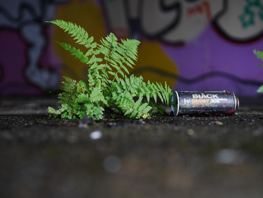 Nature strikes back: Farn und Spraydose in einem ehemaligen Büro.
